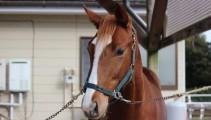 学校生産競走馬インターライオット号が競走馬デビューします!