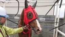 学校で生まれ育った千葉県産馬「インターライオット」の復帰初戦