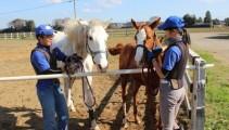 【本校生産馬・現役競走馬紹介】ステップアップに向けてゆっくり過ごしています(^O^)