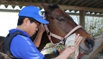 騎乗訓練前の基本 新入生の馬装と手入れ実習(^O^)