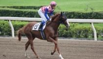 馬の学校 生産馬「インターライオット」が引退【学校生産馬 誕生から引退までの歩み】