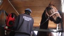 競技会に向けて準備完了!ロビン、馬運車練習の成果は?
