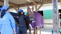 正しい着せ方を学んで、人も馬もしっかり防寒対策!