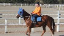 【近況報告】本校生産馬・現役競走馬のインターライオットが休養を終え、新たなステップへ!