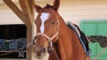 馬の顔のマーキング いろいろな「星」と「流星」☆
