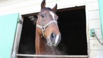 【新馬のご紹介】ディープインパクトの半弟「トーセンロレンス」が入厩しました!