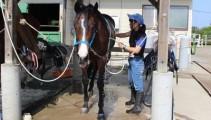 馬体をクールダウンさせながら、手入れもできて一石二鳥の丸洗い!