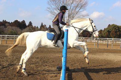IMG_8765 馬場運動、障害飛越、モンキー姿勢での騎乗 入学してから練習を重ね、たま...