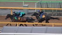 中央競馬の最前線「美浦トレーニングセンター」へ見学に行きました!