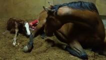 学校競走馬の誕生!イガノノニが元気な牝馬を出産しました