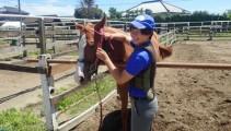 学校生産 競走馬 近況報告!現役競走馬「インターライオット」1歳馬「インターモモチャン」