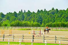 競争馬の牧場(写真)