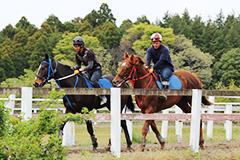 競争馬(写真)