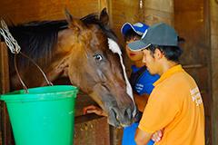 馬の世話(写真)