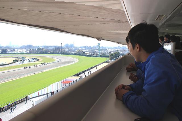 中山競馬場 見学