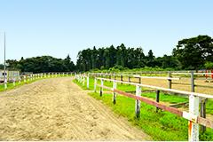 緑豊かで広大な競馬の牧場「ナリタファーム」に併設(写真)