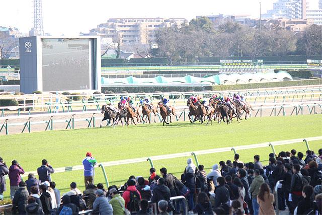 直近の育成馬・調教馬 GIレース出走実績(写真)