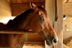 競馬の生産、育成牧場「ナリタファーム」に併設(写真)
