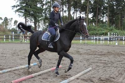 資格試験に向けた乗馬練習