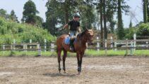 次回の騎乗試験はみんなで馬場馬術のA1課目