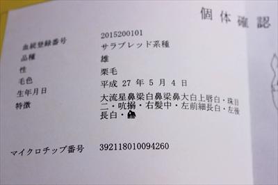 IMG_4606_R