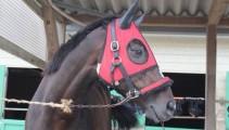 JRA重賞競走優勝馬「アブソリュート」が、『第70回 全日本障害馬術大会 Part Ⅱ』に出場します!